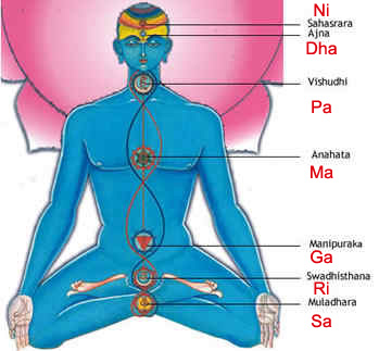 Sapthaswara in the Human System