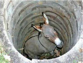 donkey in a pit