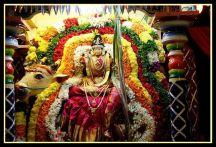 Navaratri 2014 – Day 5 Rishabha Vahanam-SRI RAMANASRAMAM TIRUVANNAMALAI