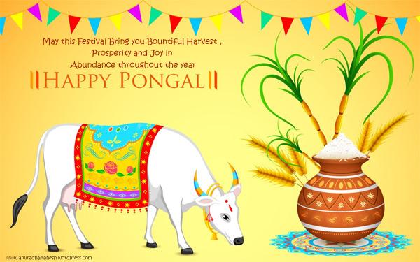 pongal2015